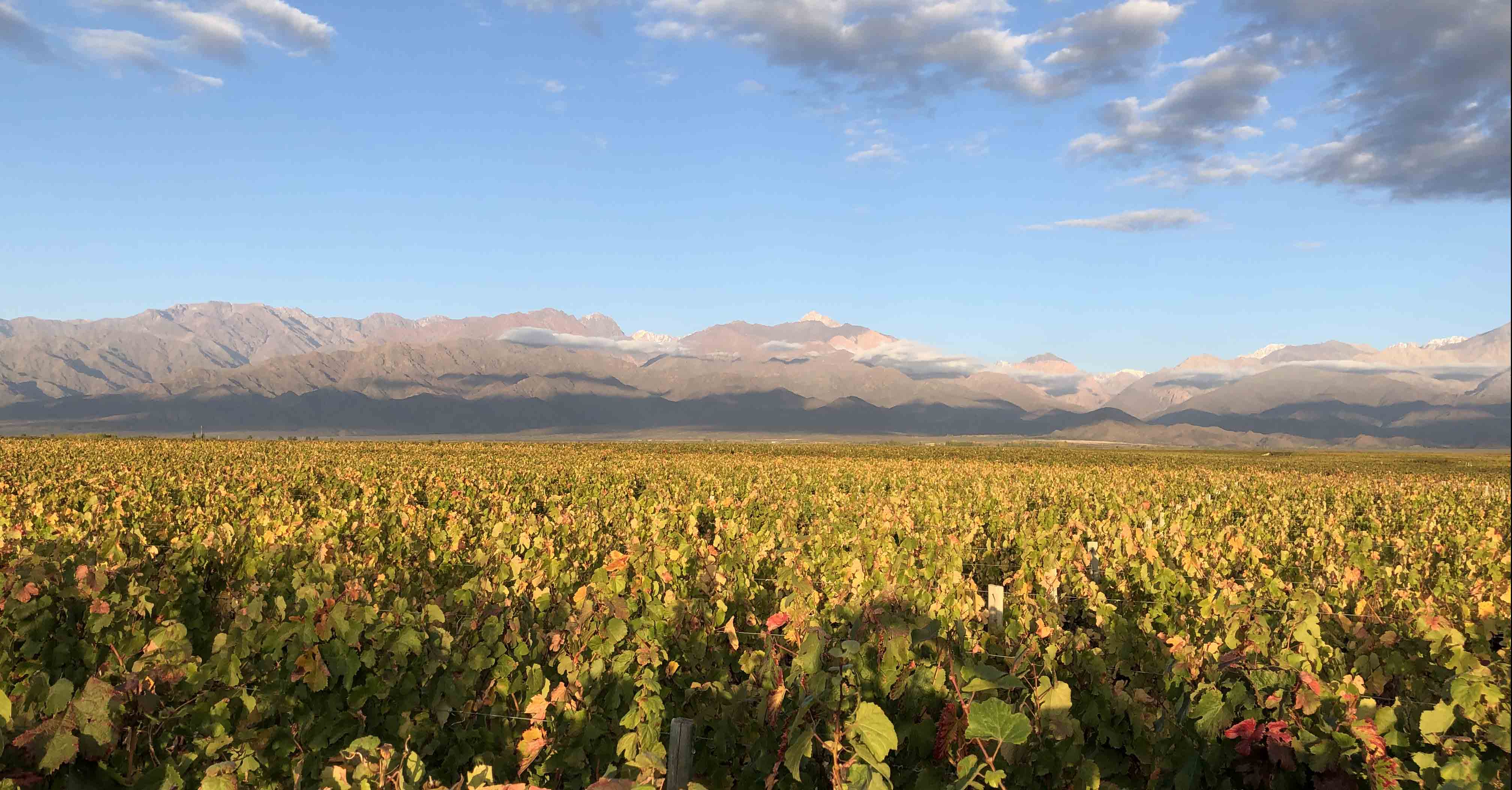 Harvest time at the vineyard – fun and family time in Argentina