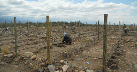We're growing! New vines planted for future expansion